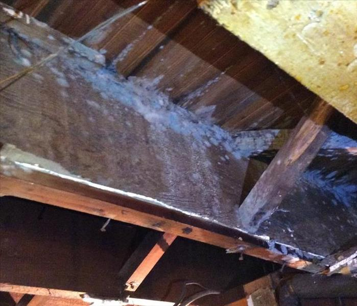Mold Remediation Mold remediation in Belleville, Nutley and Bloomfield